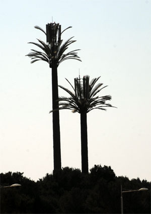 Mobile Masts camouflaged as palm trees