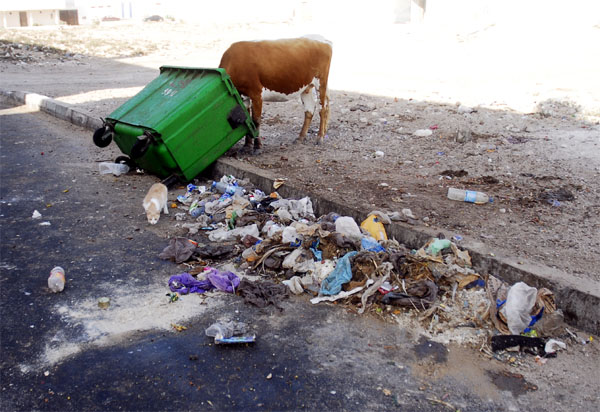 A cow and a garbage container