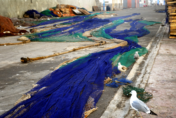 Nets in Essaouira port