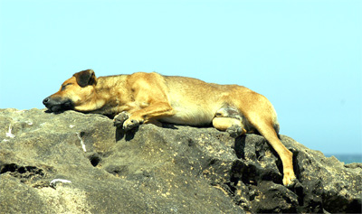 Dog sleeping on a rock