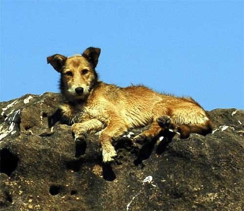 Dog on the rocks