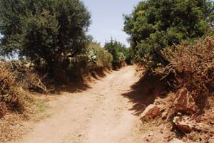 Sand road in a village